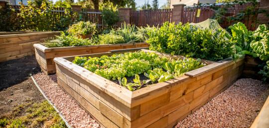 Vyvýšené záhony - pěstování vlastní zeleniny  bez námahy!